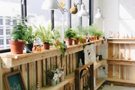 济南历下区装修:室内植物对家居风水的影响