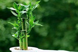 房屋装修:书房植物摆放的风水禁忌